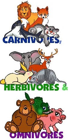 Herbivores, Carnivores And Omnivores - Lessons - Tes Teach