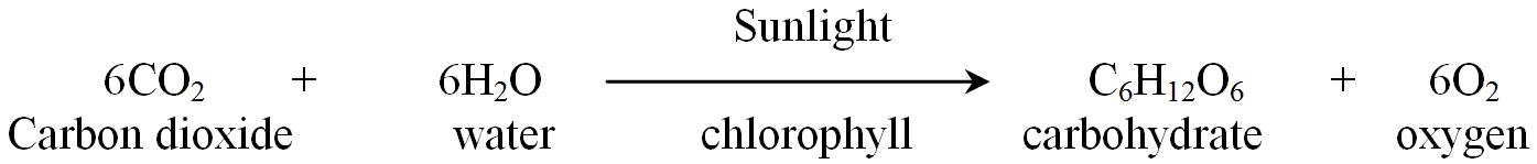 Photosynthesis Process Chemical Equation